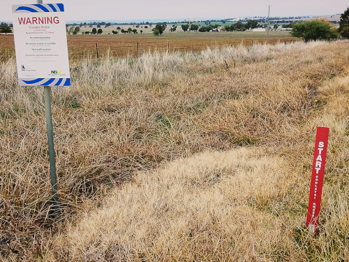 Red guide posts are important tools that notify road users, land managers and contractors that invasive weeds are present in the roadside vegetation.
