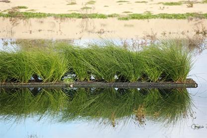 floating-reeds